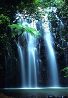 Tropical tree fern overhanging waterfall on Elinjaa Creek