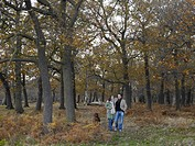 Couple walking dog in woodland