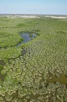 USA, Florida, Everglades, aerial view