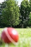 Cricket ball on pitch, focus on stumps and trees in background