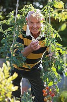 Senior man standing beside tomato plant in garden, smiling, front view, portrait
