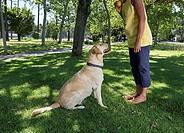 Dog looking up at woman holding ball, standing in shade of tree in park, side view