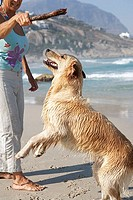 Mature woman holding stick above wet dog on beach, dog rearing up on hind legs, side view
