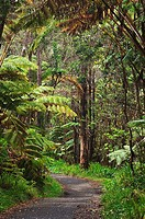 Hawaii, Big Island, Hawaii Volcanoes National Park, trail through native rainforest at Thurston Lava Tube