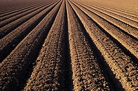 California, Field of plowed soil ready for planting