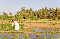Sudan, Eastern Sahara, Soleib, working farmer