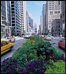 Median planter boxes full of flowers on Michigan Avenue in Chicago