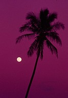 Palm tree with moon in a bright pink sky