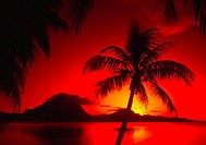 Palm trees silhouetted by red sunset and reflecting ocean