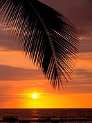 Silhouette of palm frond over the ocean as sun sinks into the horizon