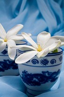 Spa elements, Oriental teacups with white flowers nestled upon blue cloth