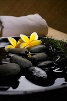 Spa elements, Stones in water in a black bowl with plumeria and rosemary, towel in background