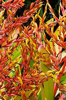 Close-up of exotic bright yellow and red flowers growing in a thick bush