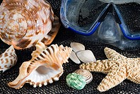 Studio shot of a a variety of seashells and snorkel mask on a textured background