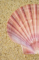 Half of a pink scallop shell on sand background