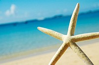 White seastar in front of blurred sand beach, blue ocean and sky