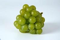 Grapes, ´Moria, Muskat´, Vitis, vinifera,