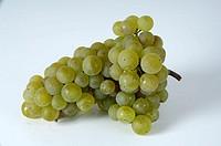 Grapes, ´Scheurebe´, Vitis, vinifera,