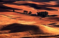 Agrarian, Country, Palouse, Country, Washington, USA