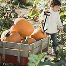 Young Asian girl with wagon full of pumpkins in pumpkin patch