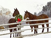 Horses looking over fence in snow next to Christmas wreath