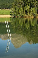 Ladder emerging from water with trees