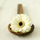 White flower on a wooden ladle