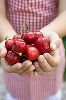 Hands holding fresh red cherries
