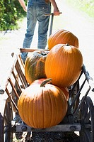 Person pulling wooden cart full of orange pumpkins outdoors
