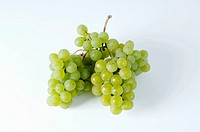 Green grapes, variety Cantaro
