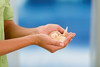Hands holding seashells