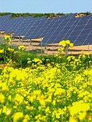 Solar panels and field of rape (production of biodiesel). Puiggròs, Lleida province, Catalonia, Spain