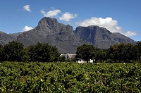 Field in front of a mountain, Boschendal Wine Estates, Western Cape Province, South Africa