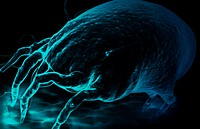Dust mite (thumbnail)