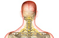 The nerve supply of the head and neck (thumbnail)