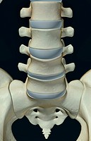 The bones of lumbar vertebrae