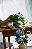Bunch of white tulips on a table, hydrangea on chair