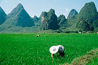 Farm workers in china