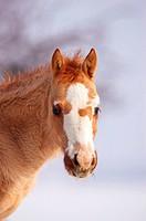 foal - portrait