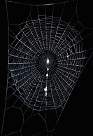 Orb-weaving spiderweb