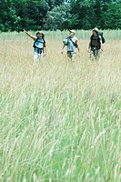 Three hikers walking through field, front view