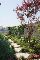 Path in Backyard Garden