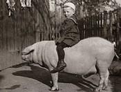 Menschen hist , Kinder, Junge auf einem Schwein reitend, um 1920, Tiere, 20 Jahrhundert,