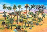 Palm grove  Artwork of several palm trees Family Arecaceae