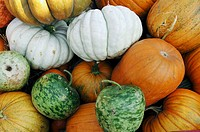 Pumpkins, Memphis, Tennessee, USA