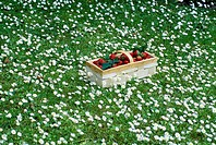 Basket of strawberries in flowery meadow