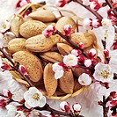 Almonds in small basket with almond blossom