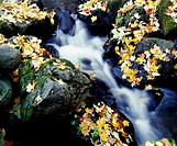 Fall leaves among rocks on a river