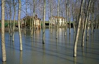 flooded golena of po river, canalnuovo, italy