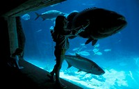 Nassau, Atlantis Hotel, aquarium Bahamas, Caribbean, America